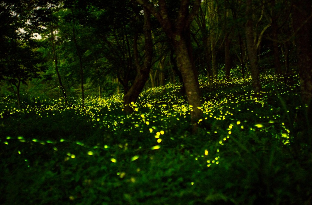 Th Tour Of The Fireflies